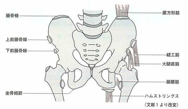 引用画像:骨折の画像診断 羊土社